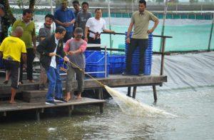 Presiden Bersama Petambak Panen Udang Vaname di Bekasi 113