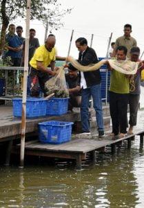 Presiden Bersama Petambak Panen Udang Vaname di Bekasi 114