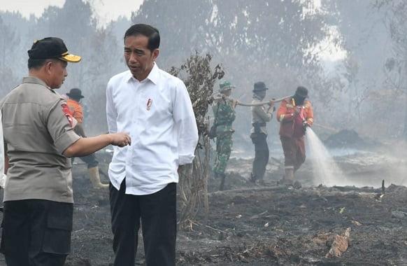 Presiden Tegaskan Upaya Maksimal Pencegahan Karhutla 1