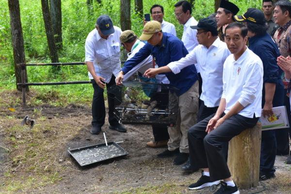 Presiden: Sudah Saatnya Perhatikan Ekosistem Flora dan Fauna serta Reboisasi 101