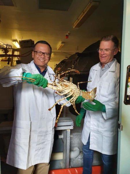 Menteri Edhy : Lobster Bisa Dibudidaya dari Telur hingga Dewasa 101
