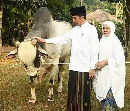 Idul Adha 1441 Hijriah, Presiden Jokowi Kurban Sapi di 34 Provinsi 113
