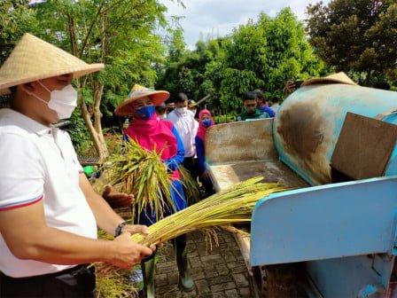 Wali Kota Jakbar di Kembangan Panen Padi 200 Kg dan Alpukat 113