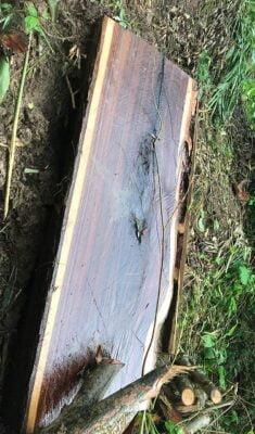 LSM Desak KPH Kuningan Tangkap Pelaku Illegal Logging Hutan Gunung Bayu 114